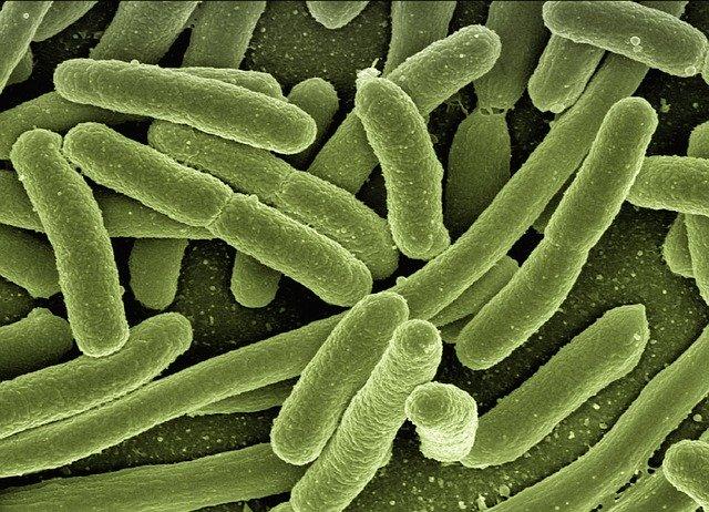 bactérie microscopique